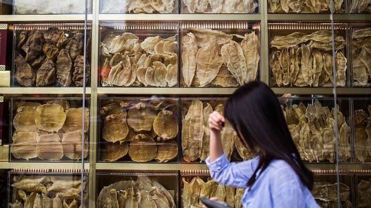 Policía de Hong Kong decomisa 3.22 millones de dólares en vejigas de totoaba; iban de Los Ángeles